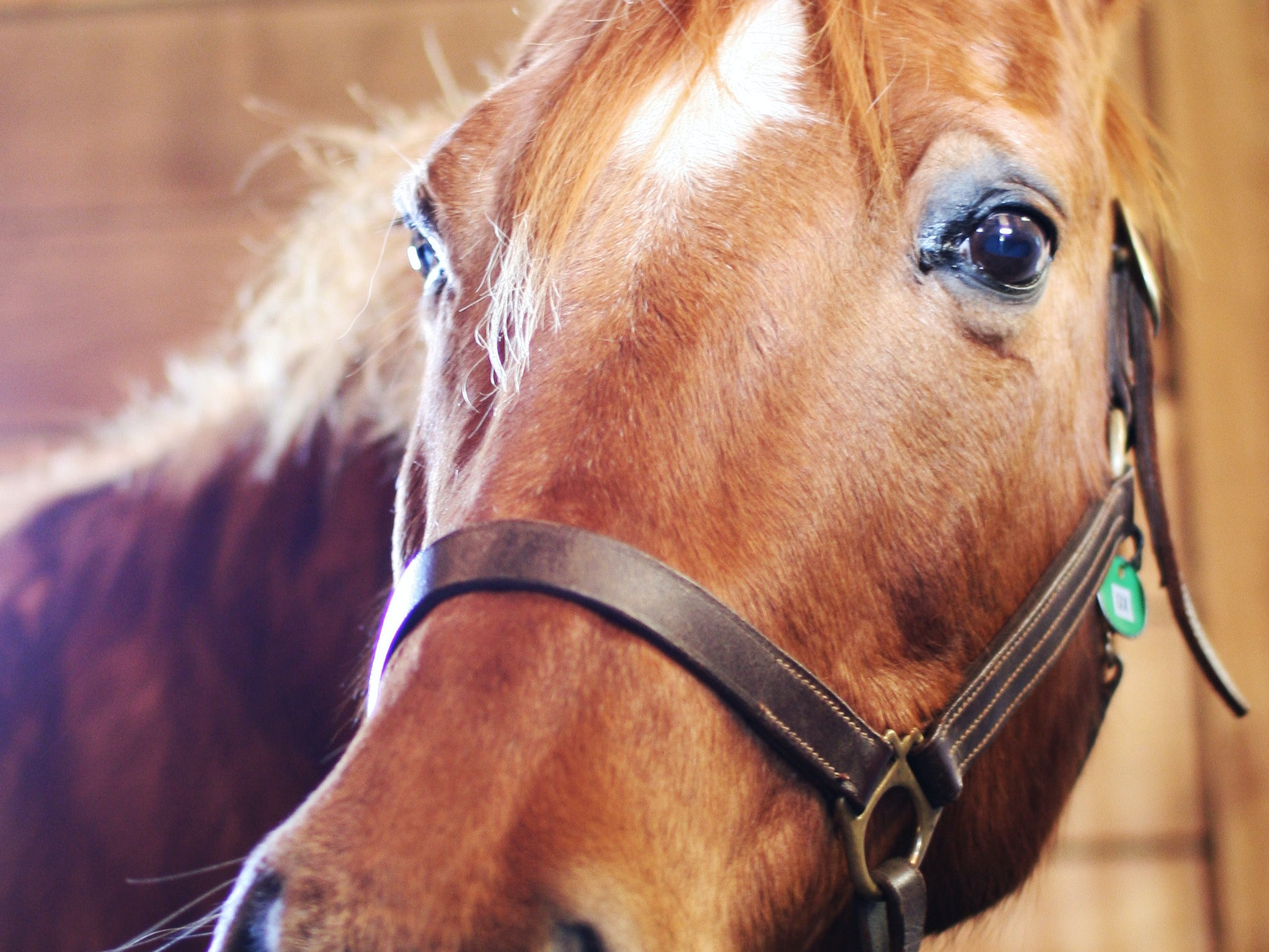 Equine Therapy Isn't Really About the Horse