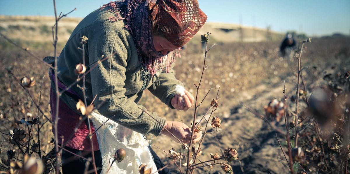 Uzbekistan is the world's sixth largest producer of cotton, with much of it being picked by state-sanctioned, forced slave labor.