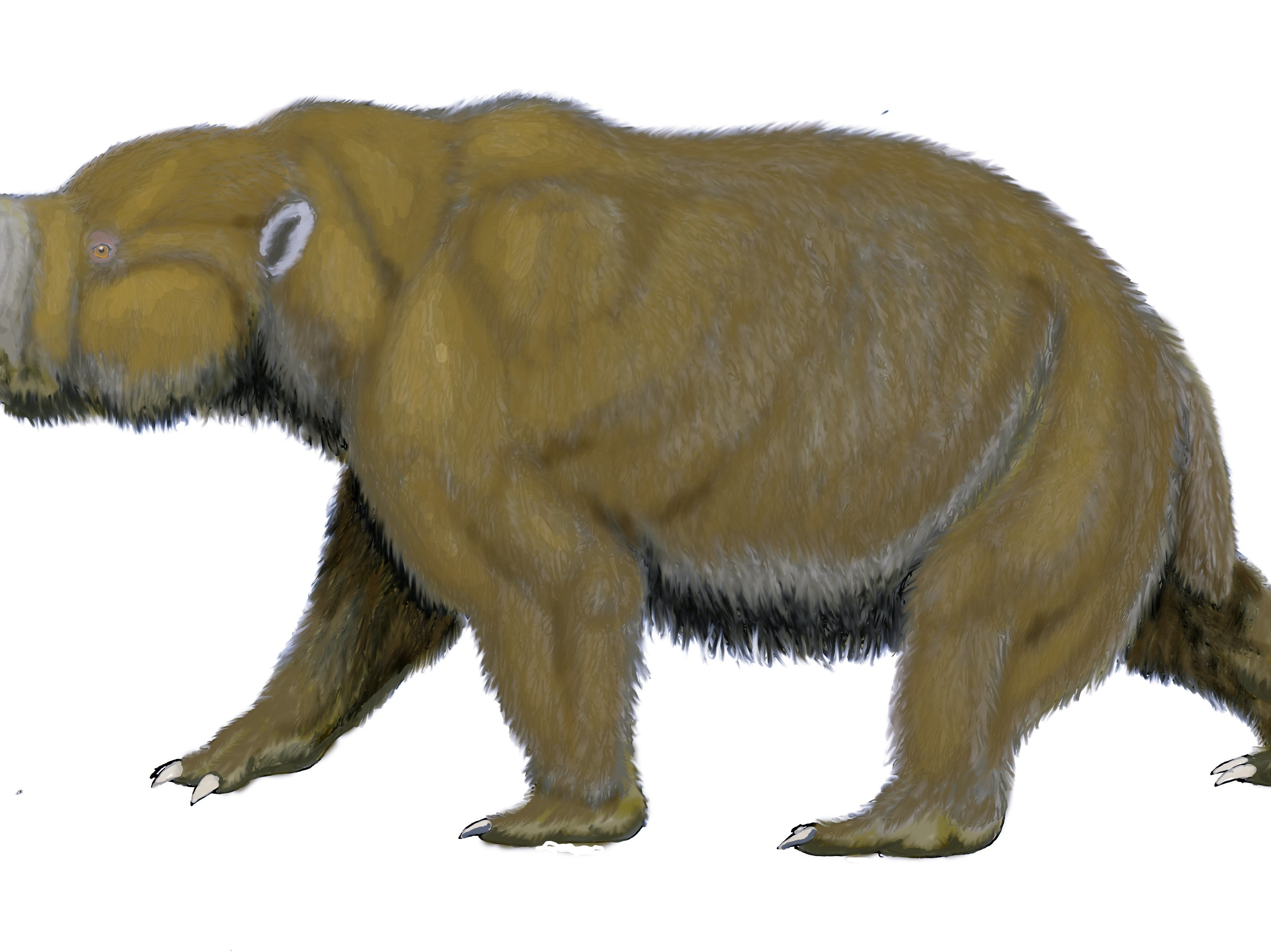 Diprotodons were giant marsupials that lived on the Australian continent for over 1 million years but went extinct shortly after humans arrived.