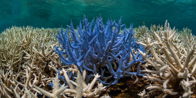Fluorescing and bleaching corals in New Caledonia in March 2016, captured by The Ocean Agency / XL Catlin Seaview Survey.