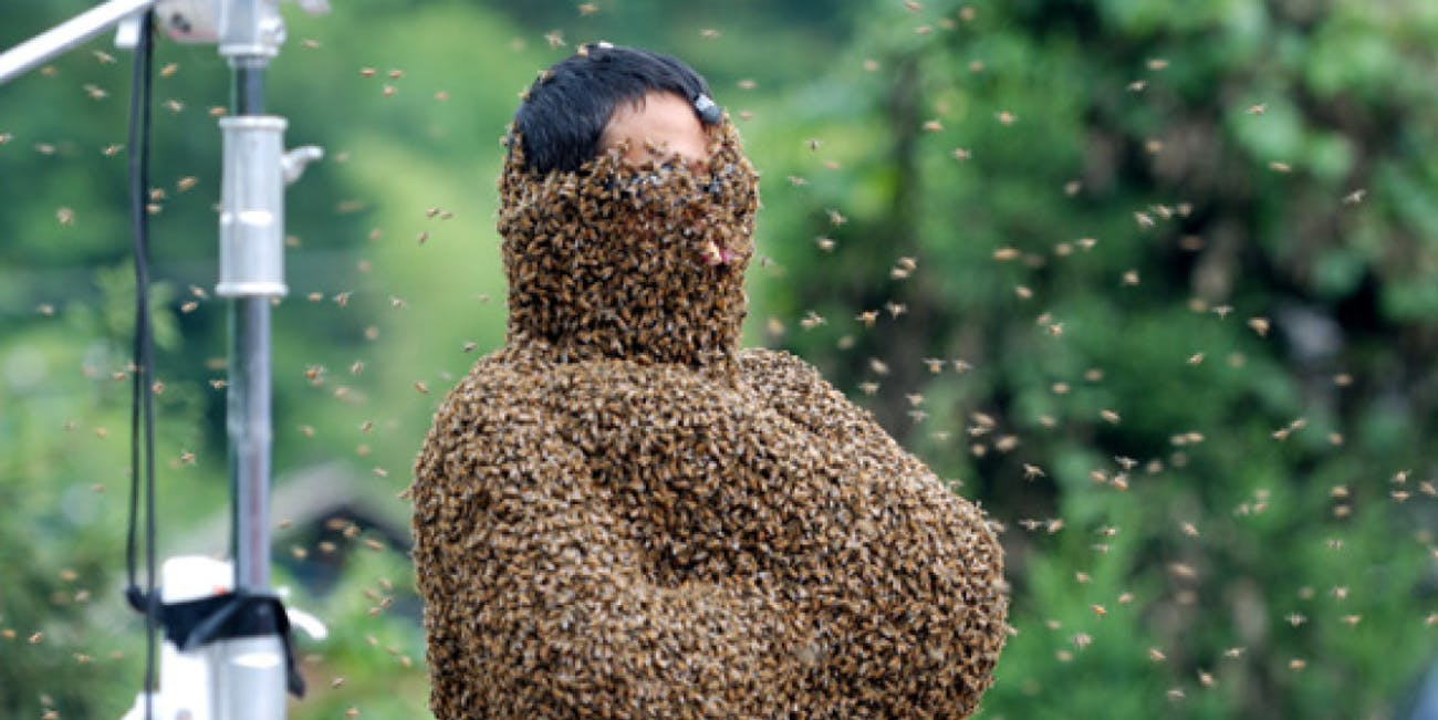 bee bearding hive queen swarm American horror story