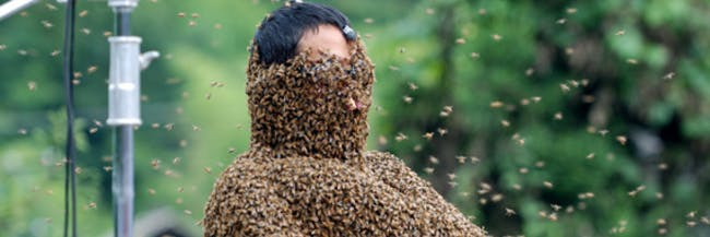 bee bearding hive queen swarm American horror story