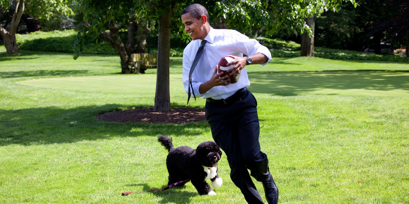 Barack Obama, dog, Bo