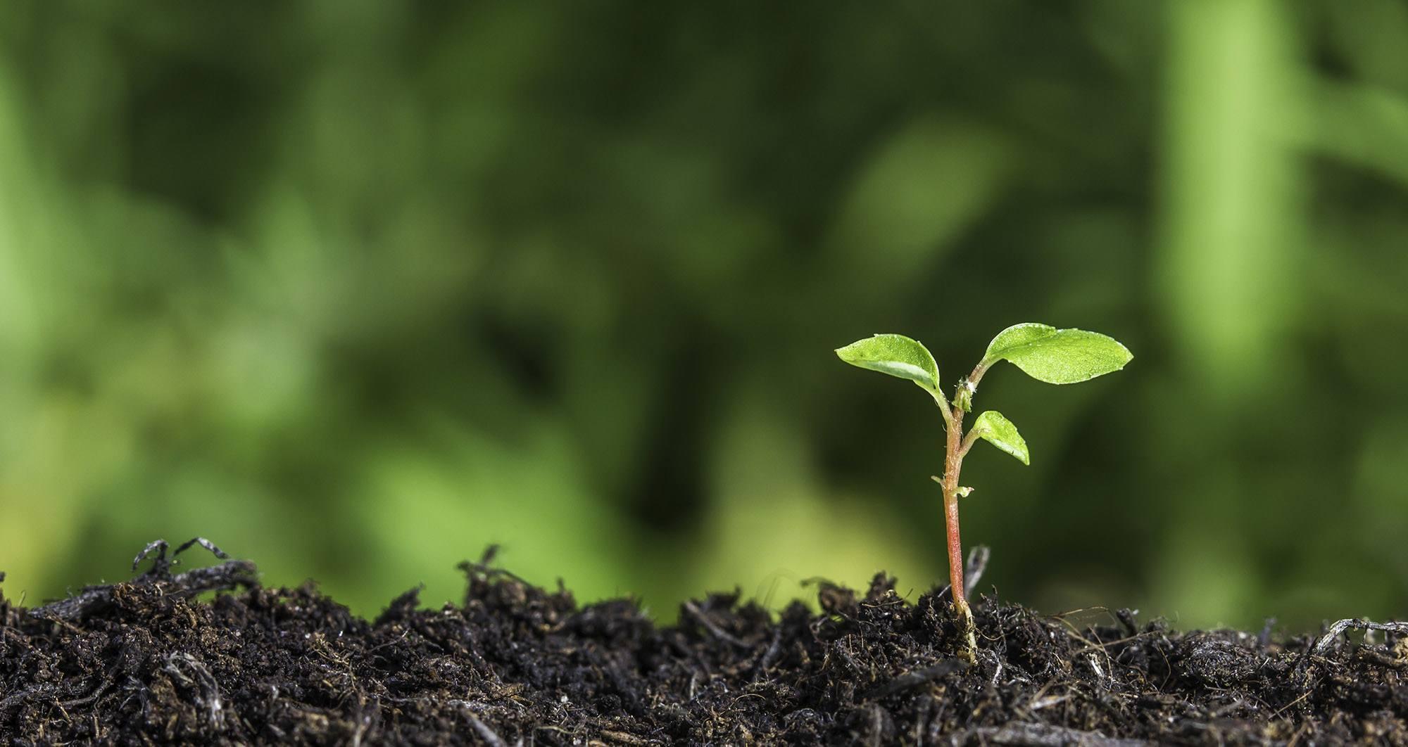 Comprehensive Evaluation of Effective Biomass Resource