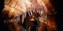 T. Rex's Railroad Spike Teeth Were a Pulverizing Machine