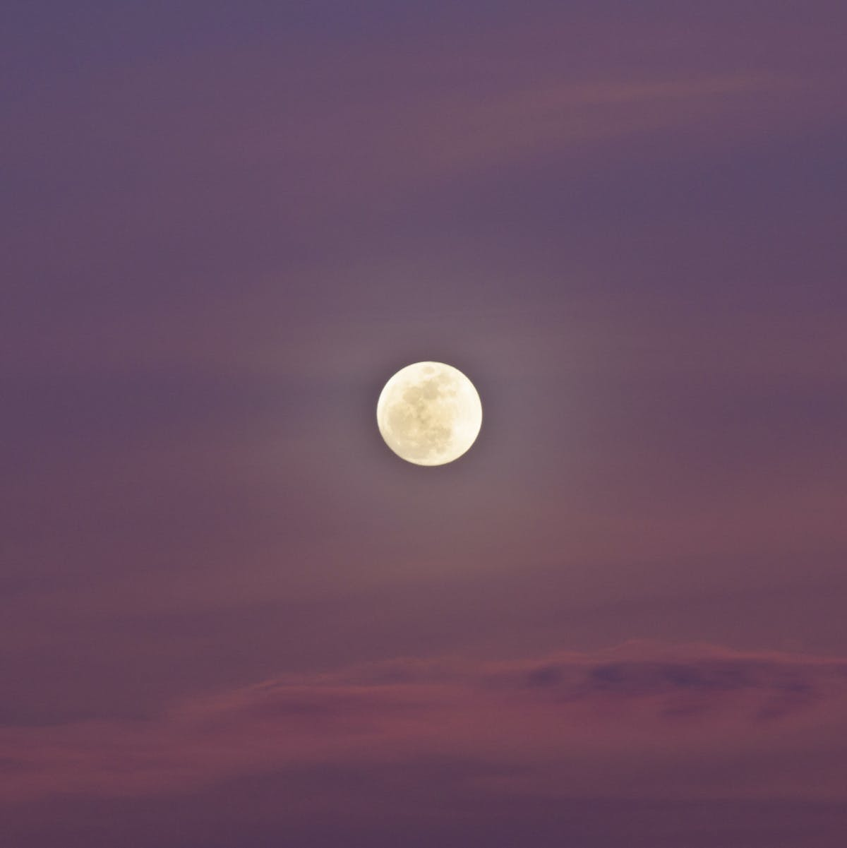 Pink Moon 2019: Friday's Full Moon Means Its Namesake Blooms on Earth