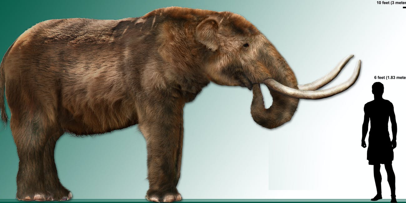 Brontosaurus rib seller