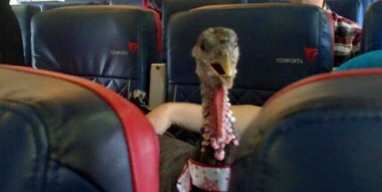 service animals, turkey