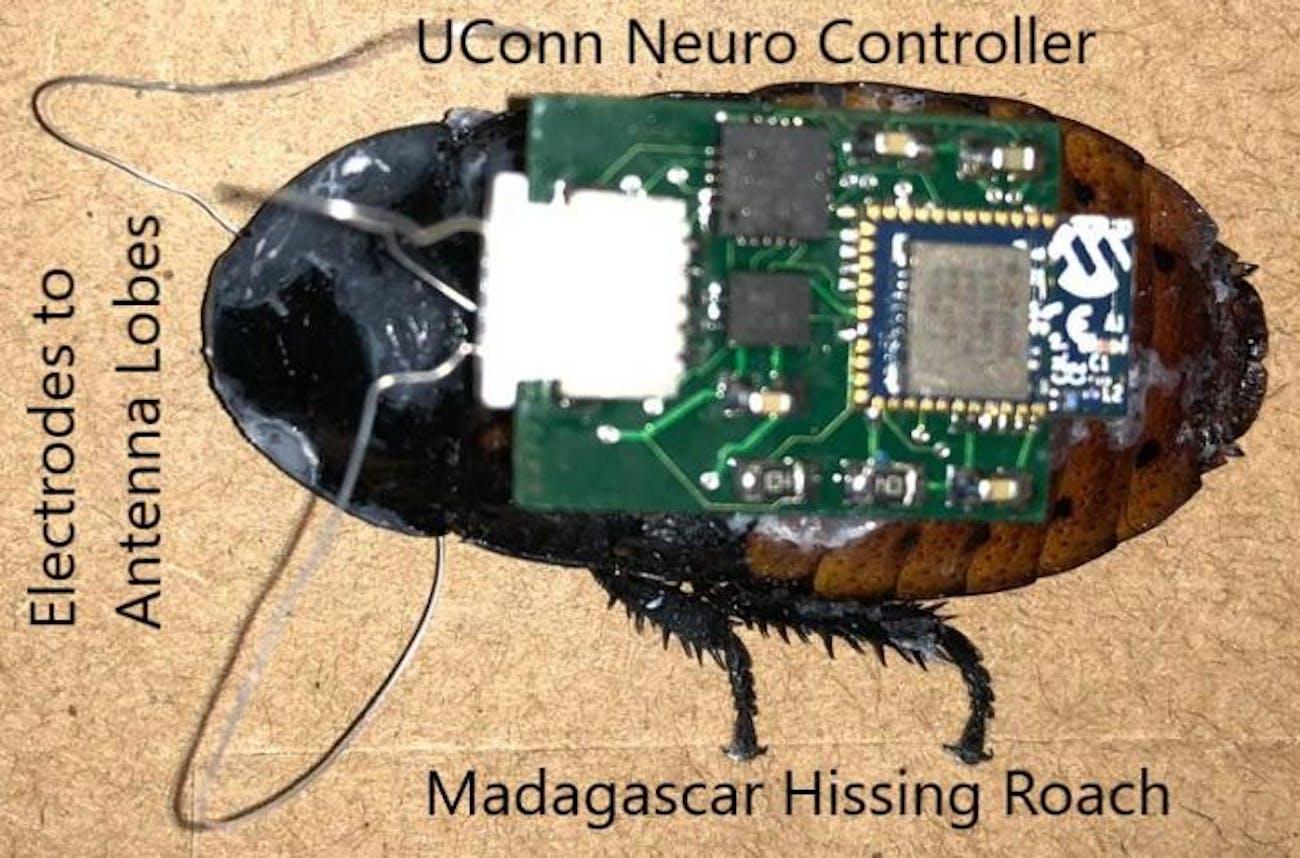 robots cockroaches