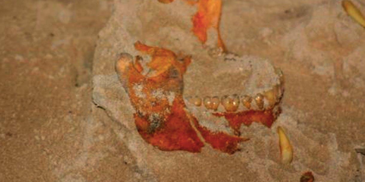 ancient teeth, Christopher Columbus
