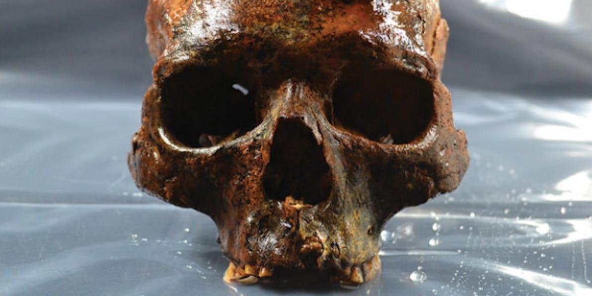 Mesolithic Scandinavian skull