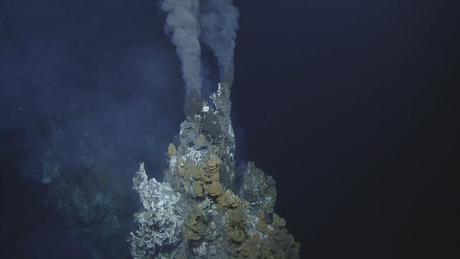 Deep-sea hydrothermal vents, known as black smokers, host a wide range of life, including skate eggs.