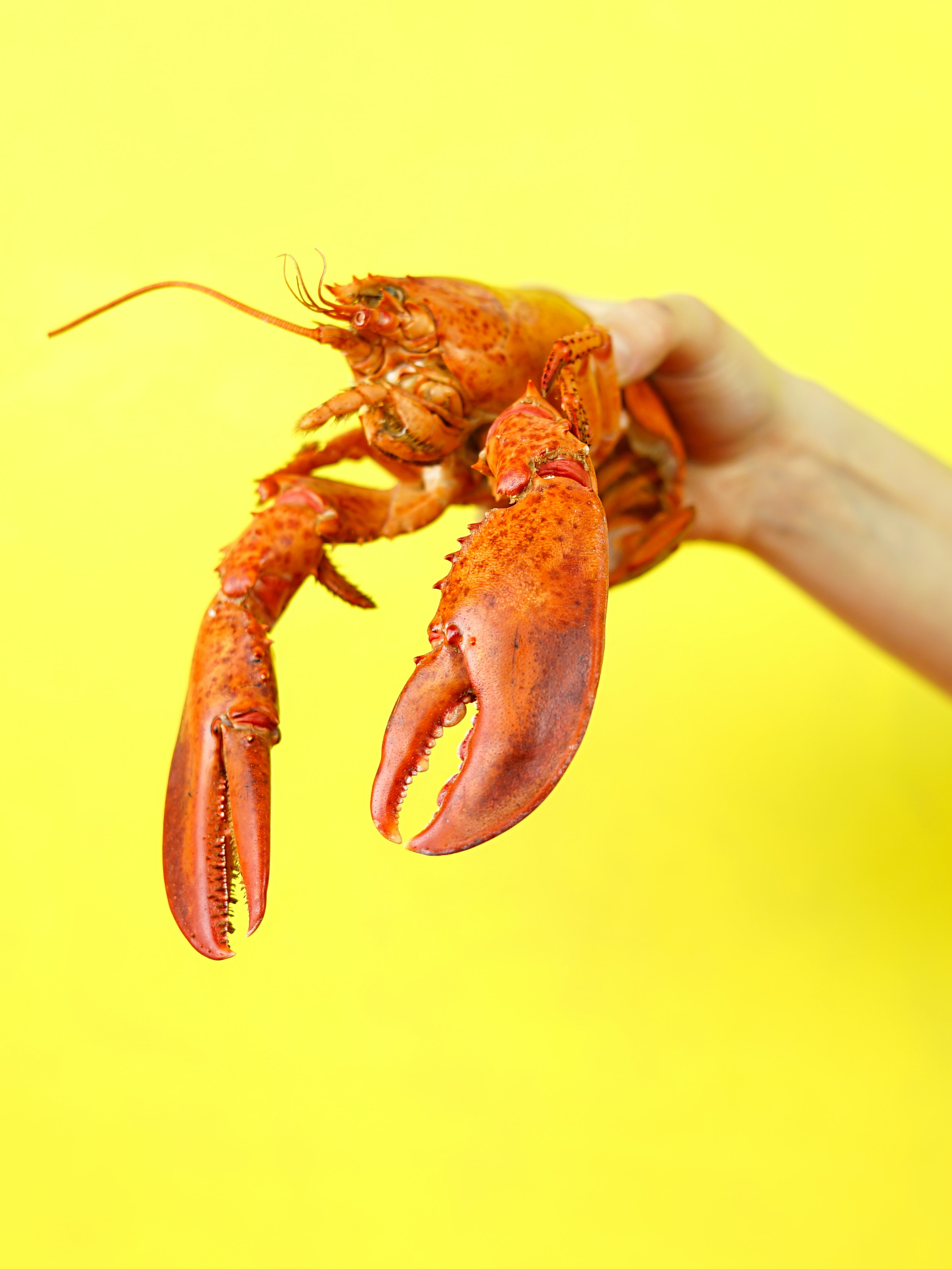Lobster Death Is