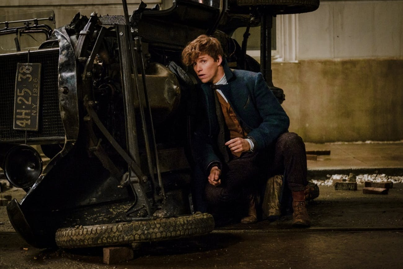 In an Alternate Dimension Newt Scamander is Tom Riddle | Inverse