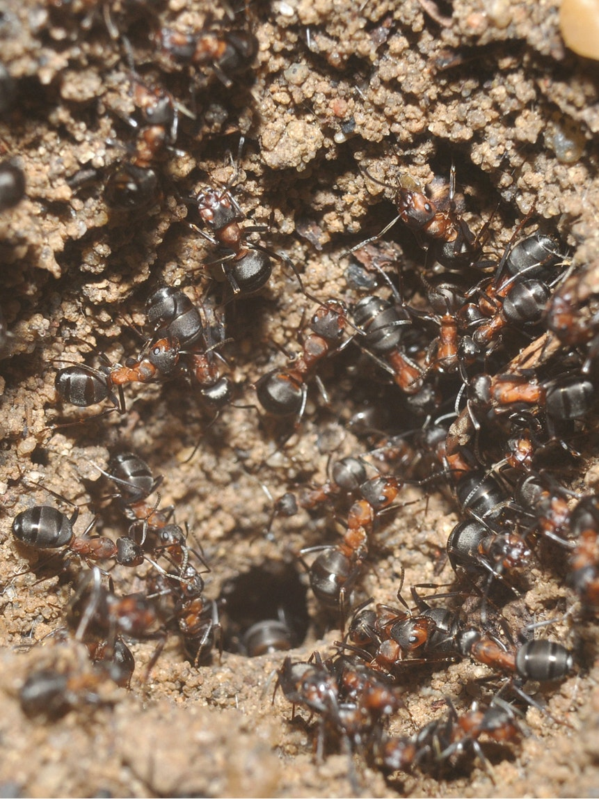 Wood Ants Poland nuclear weapons bunker