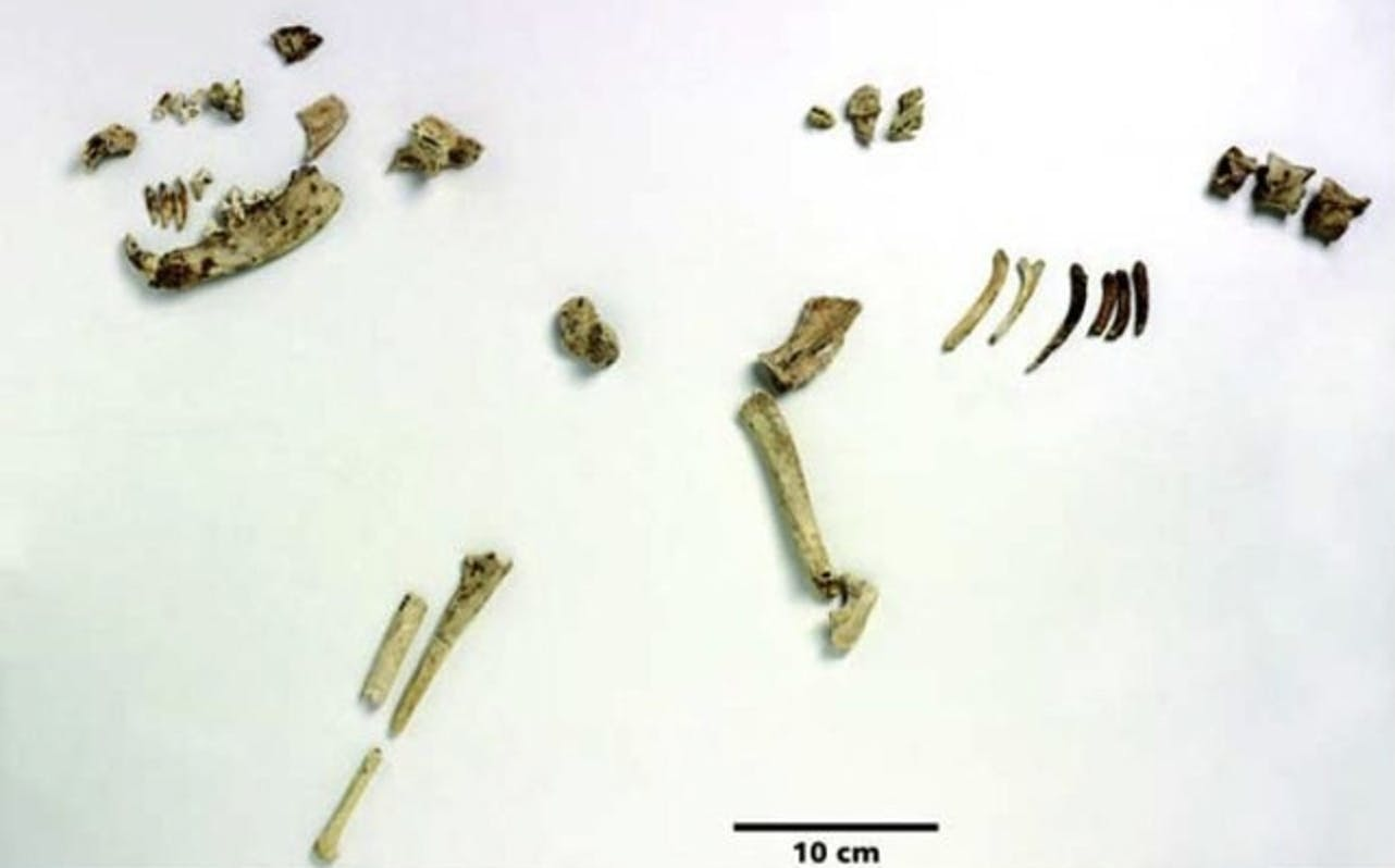ancient dog fossils