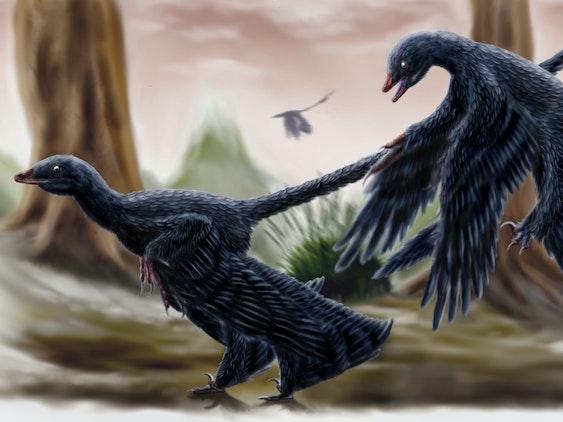 A pair of the microraptorine Microraptor searching the forest of Liaoning in spring.