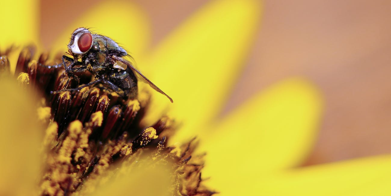 Why Flowers May Be Partially to Blame for the Deaths of Wild Bumblebees