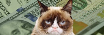 Tardar Sauce, AKA Grumpy Cat, with money