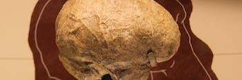Homo rudolfensis endocast - Smithsonian Museum of Natural History - 2012-05-17