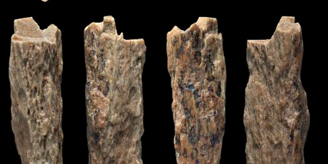 ancient human analysis