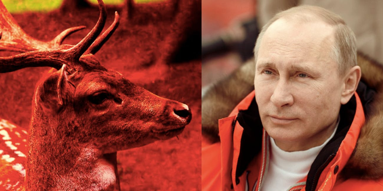 Body builders, athletes, and politicians a like are trying to bulk up with deer antler velvet and deer antler blood.