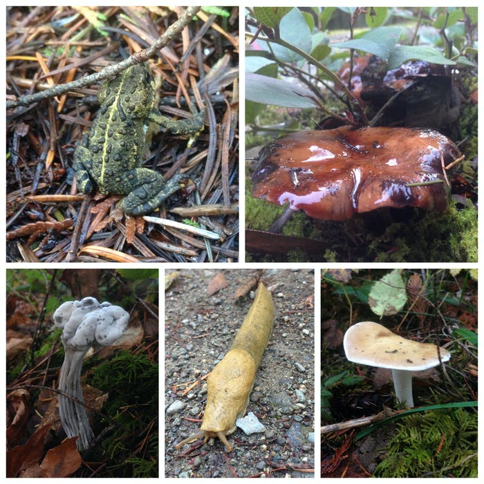 Some of my forest friends.