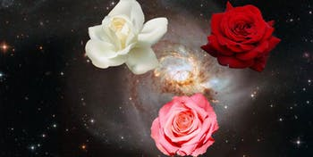 galaxy merger cosmic rose nasa