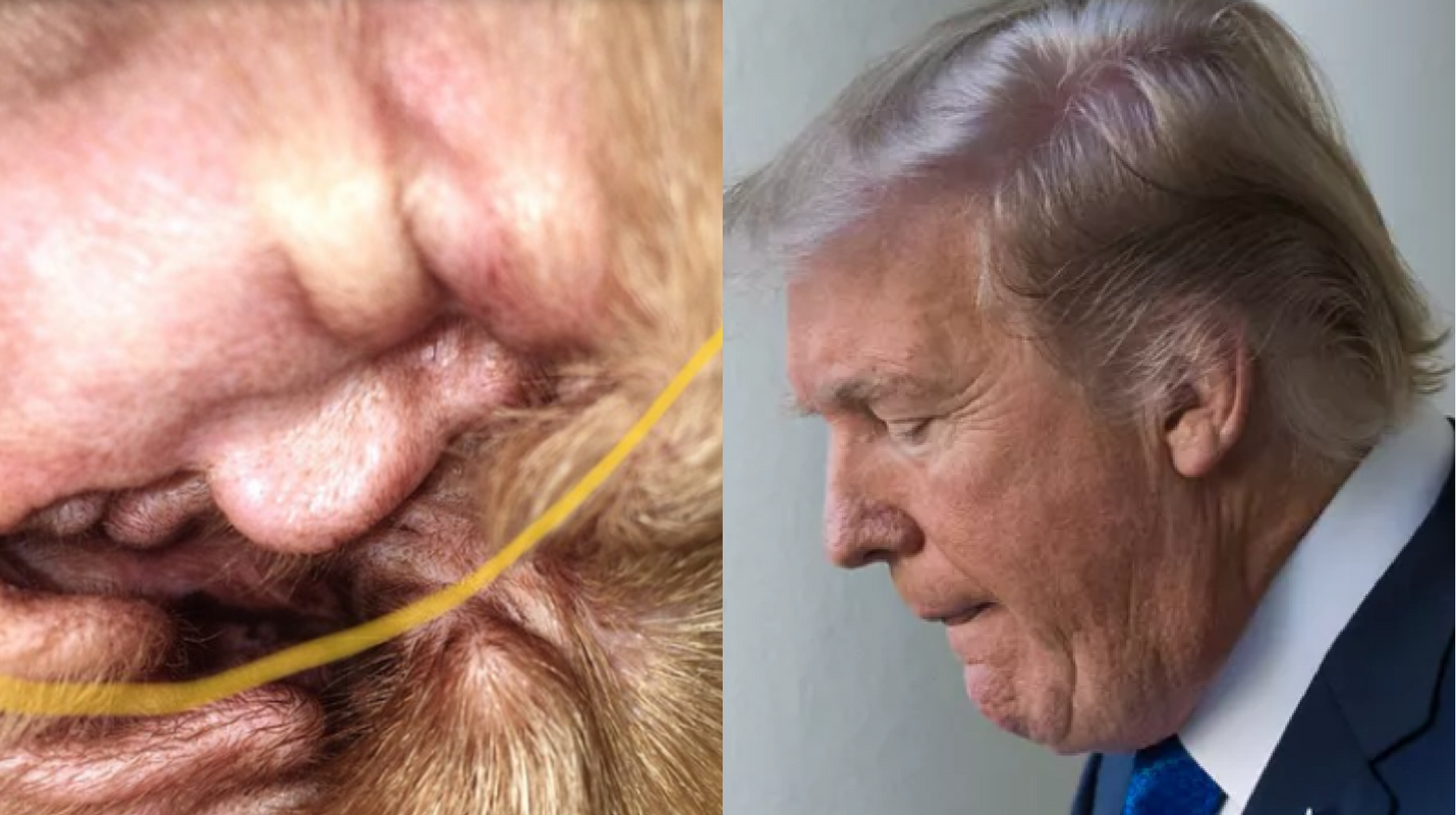 Dogs Ear That Looks Like Trumps Face