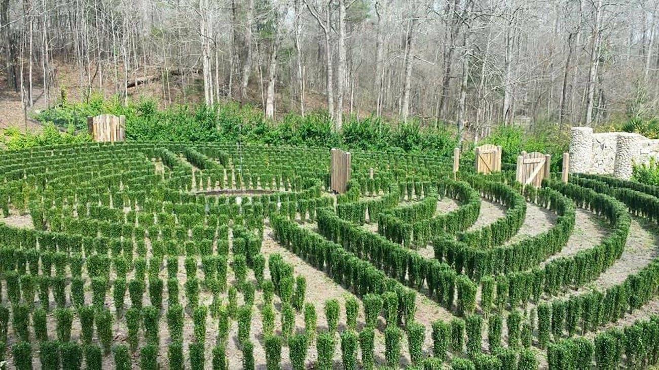 S-Town's John B McLemore's hedge maze.
