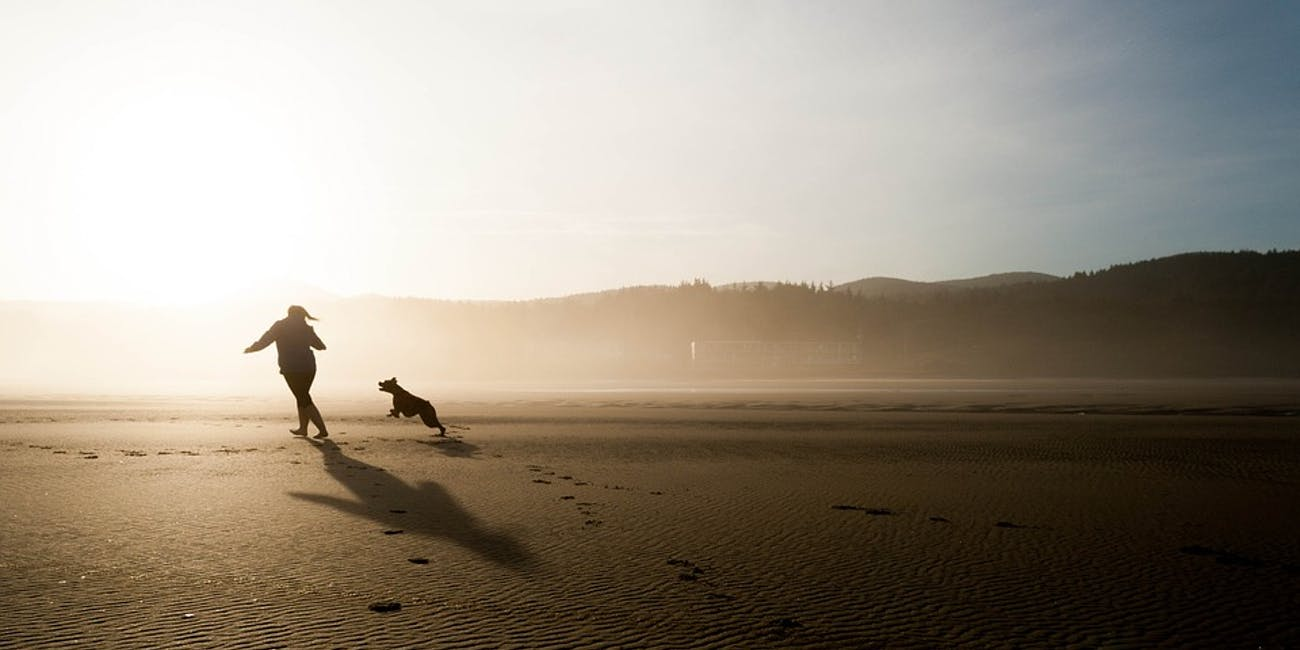 dogs exercise