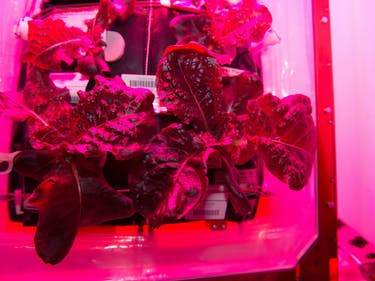 NASA Astronauts Make Farming Space Lettuce Easy as Hell