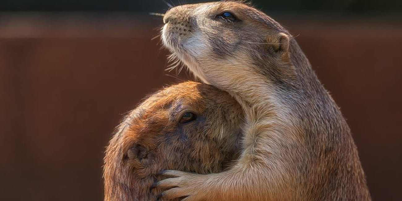 do animals grieve their loved ones a scientist looks at grief in