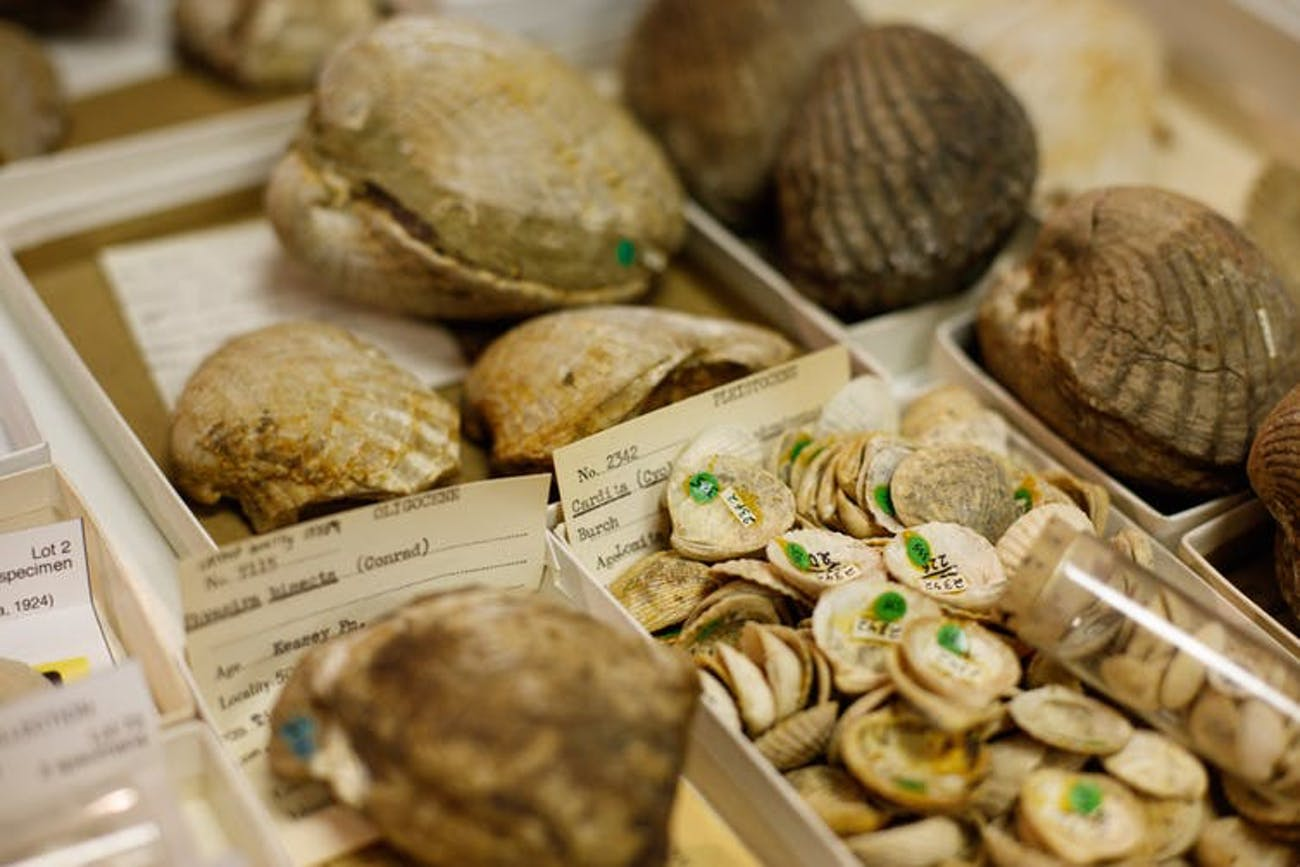 Once digitized, information about a fossil is available worldwide, while the specimen itself remains available to visiting researchers to make crucial observations or measurements.