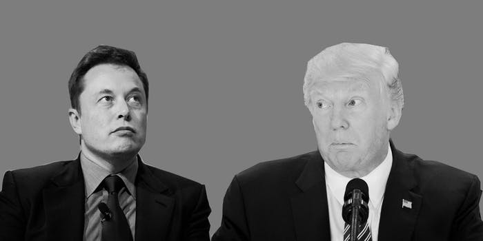 elon musk and donald trump