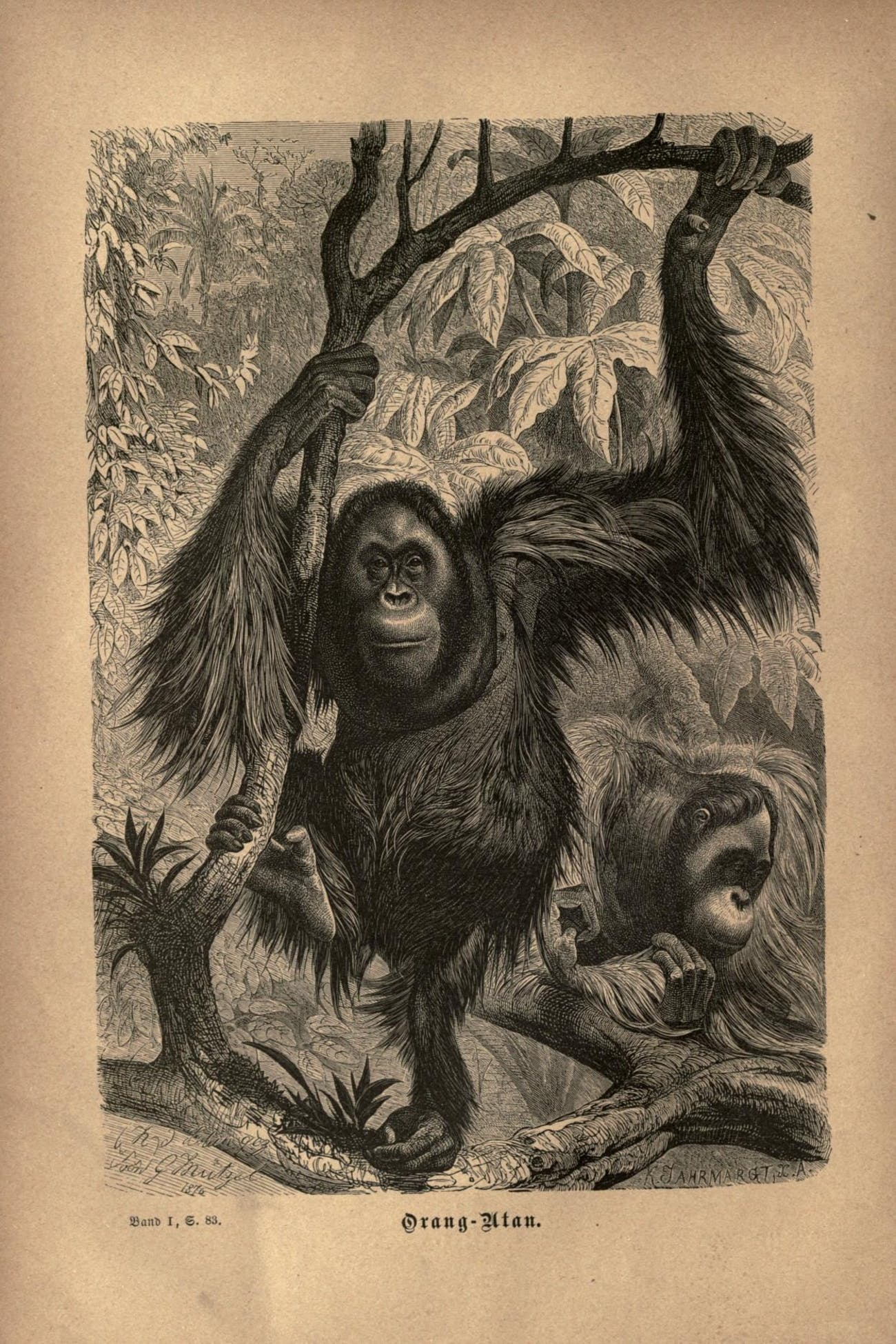 Ancient Ape Gigantopithecus Proves King Kong Can't Exist