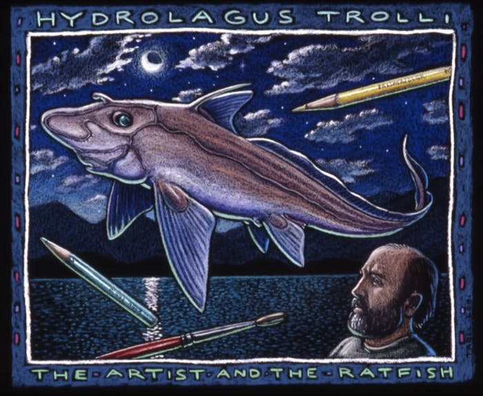 Hydrolagus trolli was named after artist Ray Troll, who frequently depicted fish in his art. Here, the species' sex organ is shown.