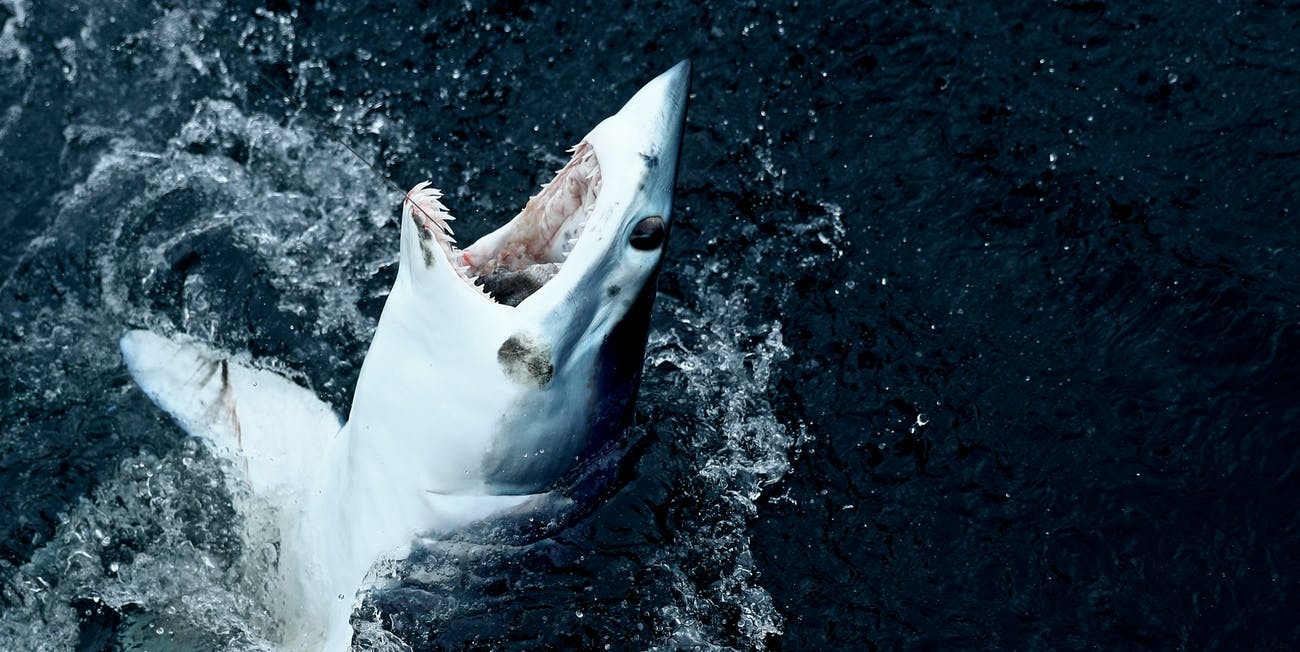 mako shark week