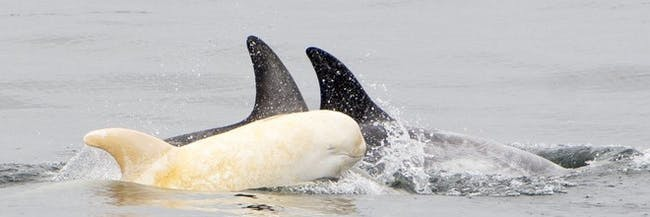 Albino Dolphin, Animals, Biology & Health