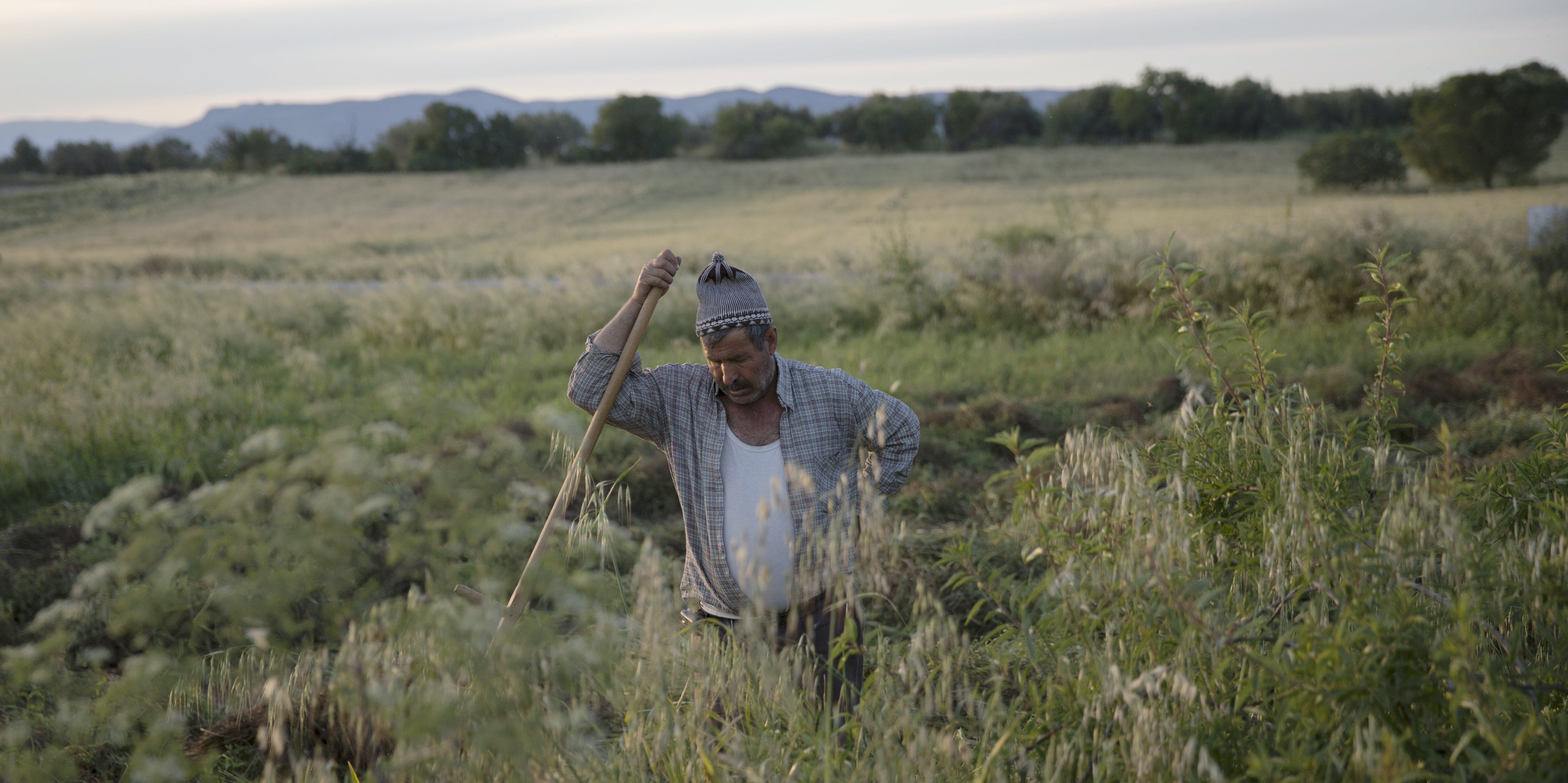 A man pauses while he scythes a crop field in Soma, Turkey.