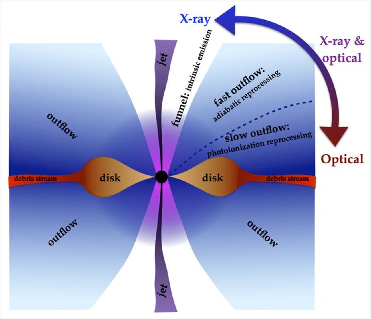 tidal disruption event black hole