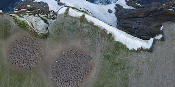 Penguin colony, Antartica