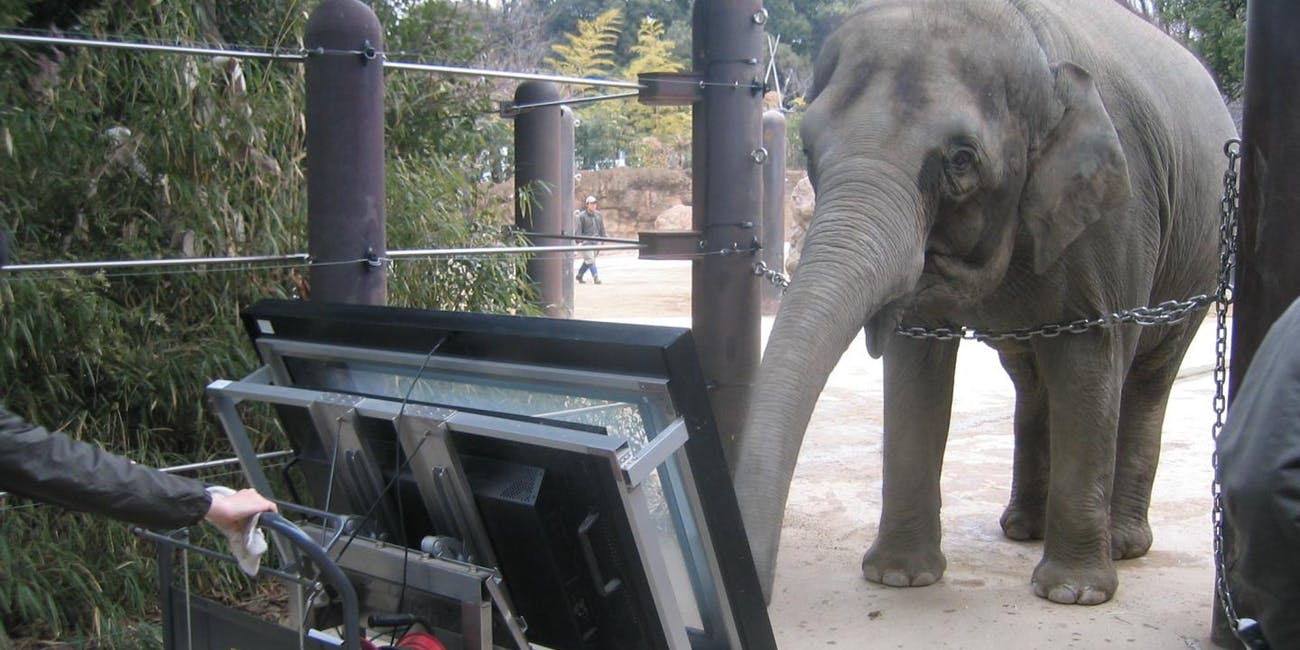 counting elephant