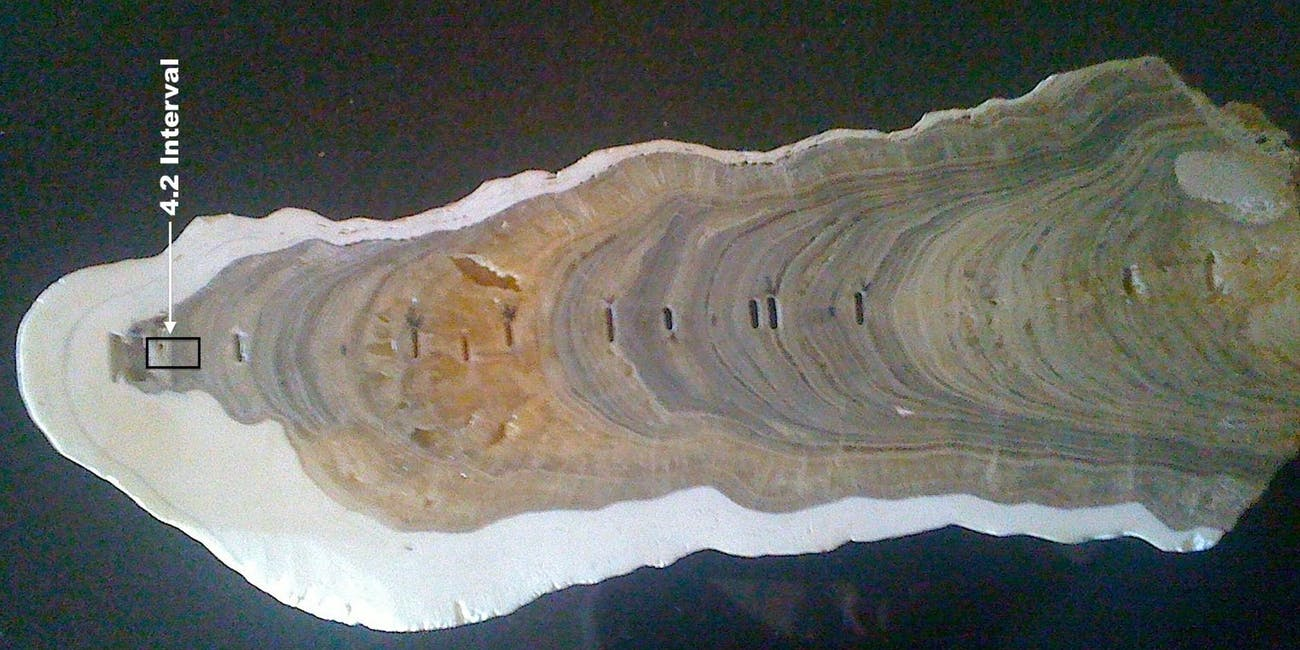 Layers within the Indian stalagmite that defines the beginning of the Late Holocene Meghalayan Age, 4,200 years ago.