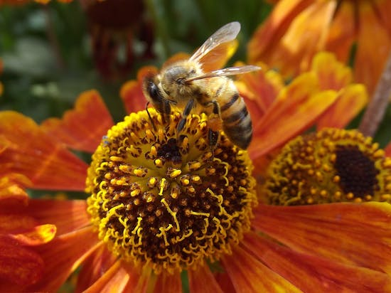 "Good News for Honeybees: 2016 Population Results are Not ""Horrible"""