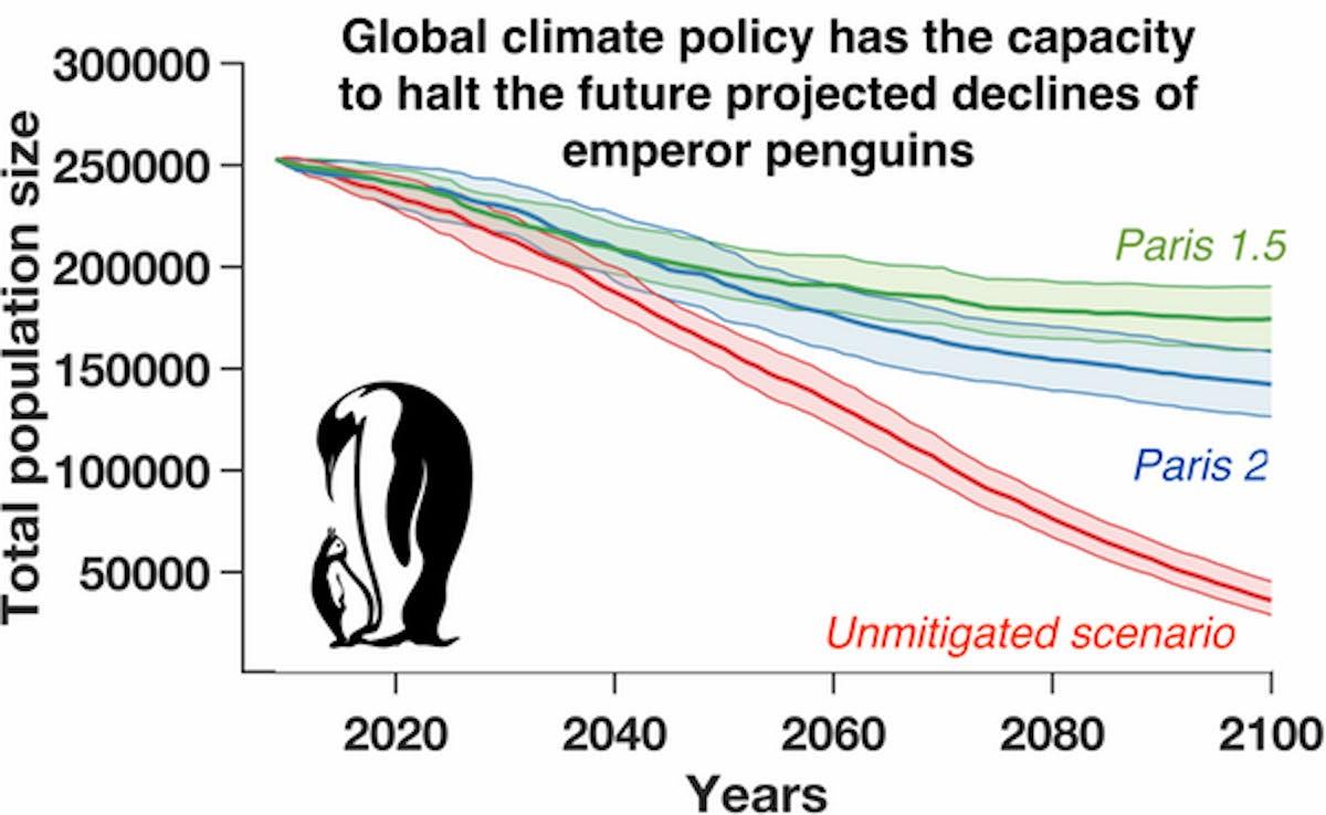 Emperor Penguins population