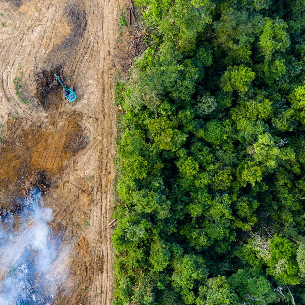 Amazon deforestation is now linked to a rise of a disease without a vaccine