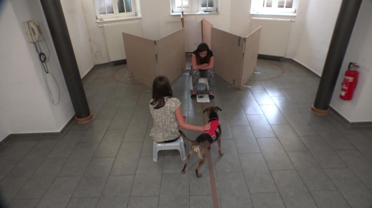 metacognition dog experiment