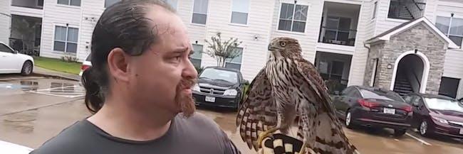 harvey the hurricane hawk