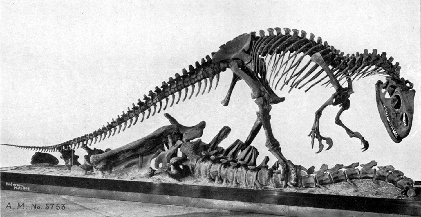 This Allosaurus was discovered by Edward Drinker Cope's fossil hunters at Como Bluff in 1879.